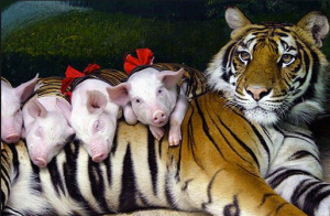piglet nurses babies